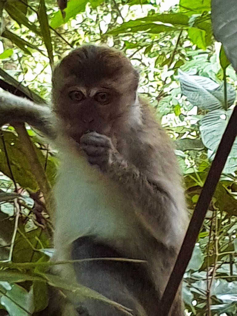Cute Macaque