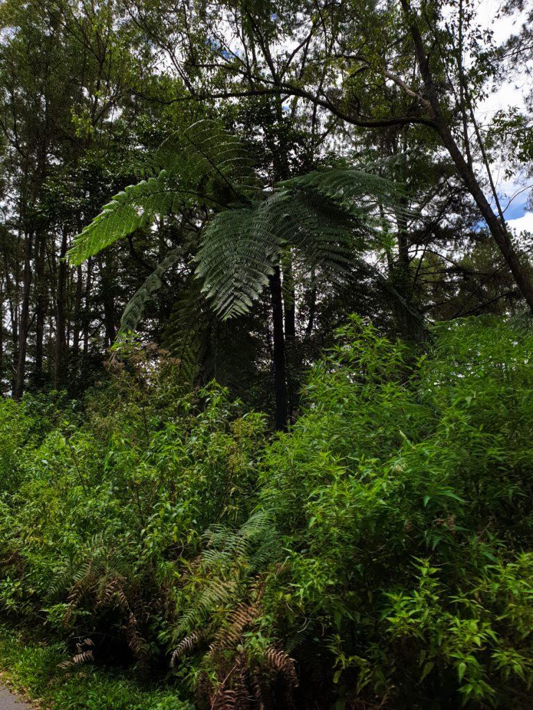 Beautiful trees at Lake Toba