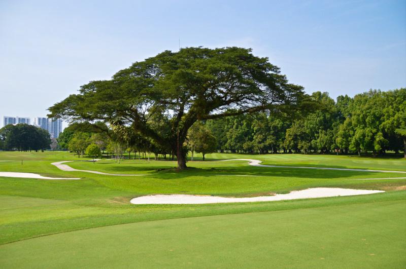 Huge Rain Tree at Royal Selangor