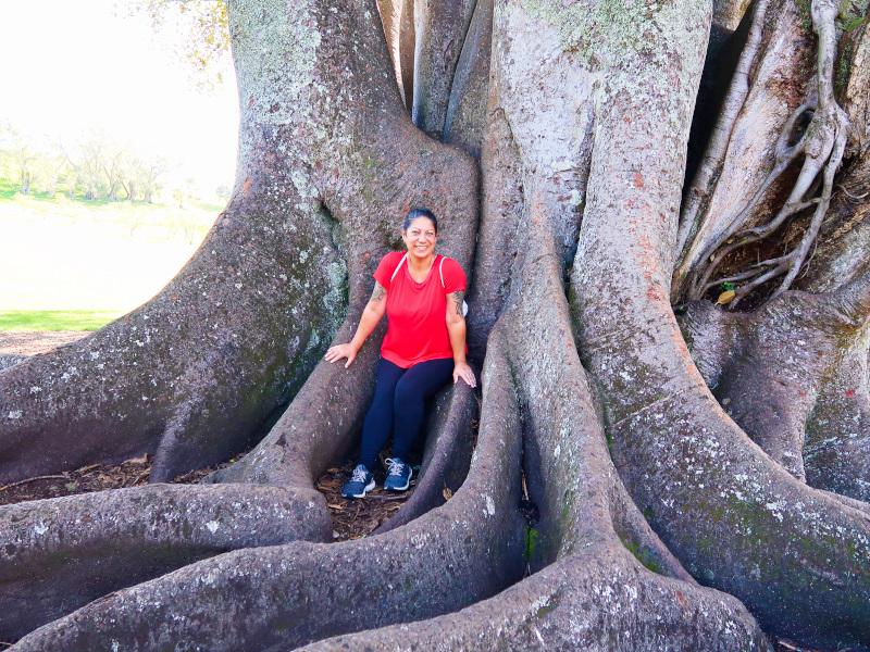 One Tree Hill explorer
