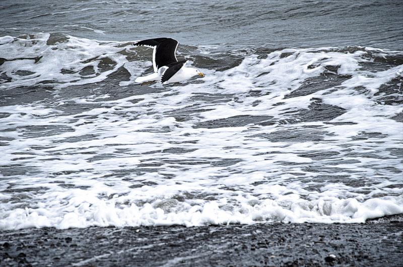 Puttering around in Otaki Beach
