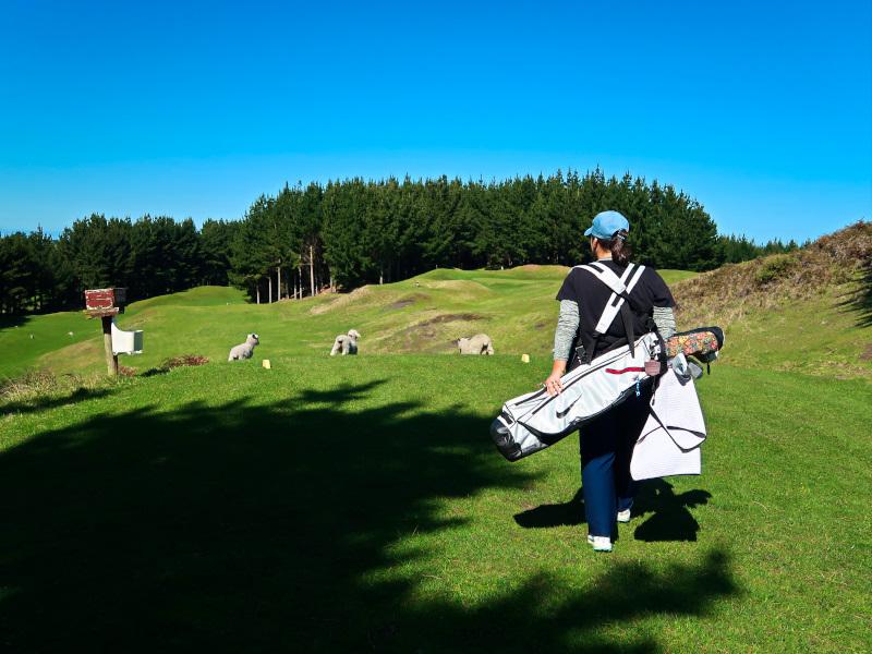 Follow the sheep at Waverley Golf