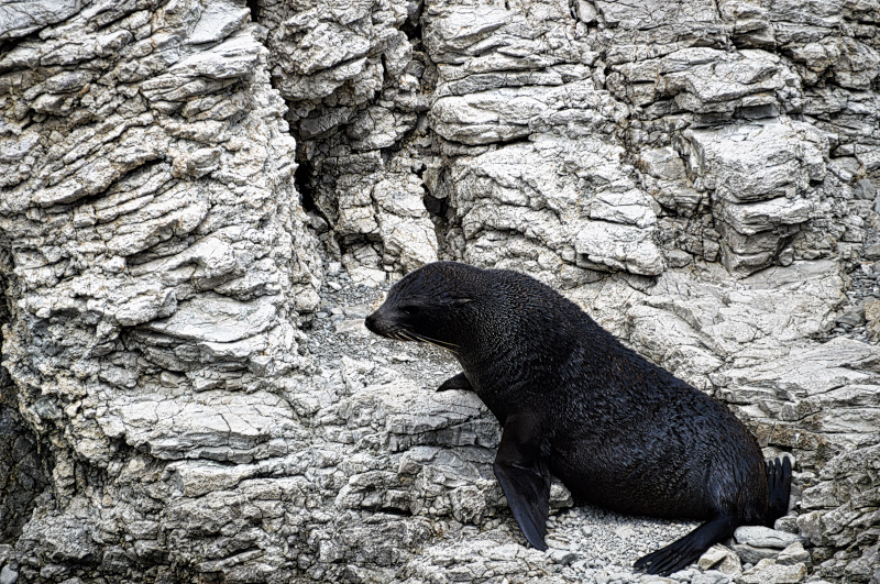 Kaikoura Seal Colony