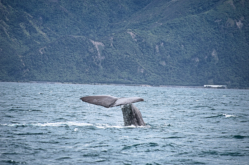 A whale of a day!