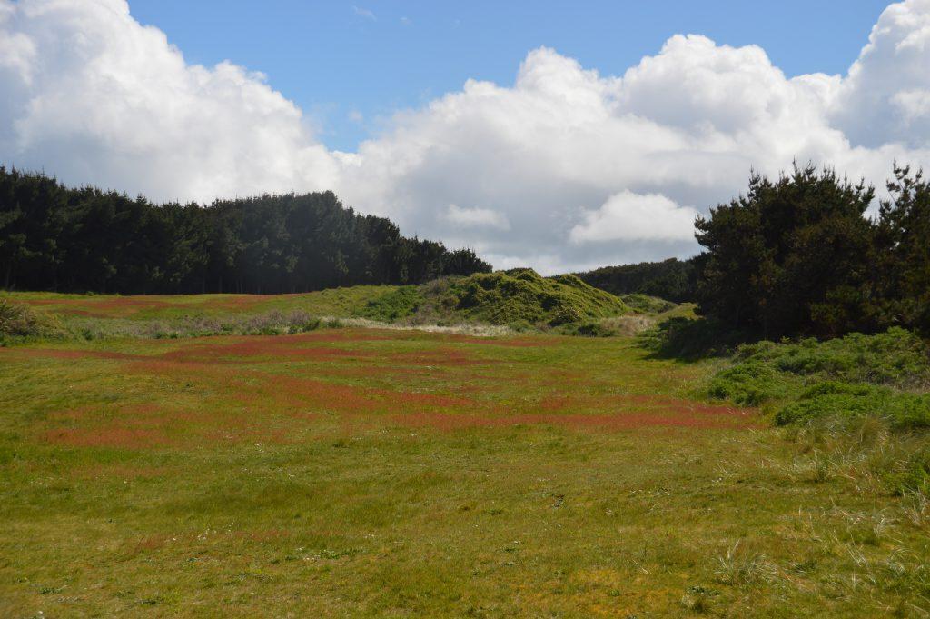 Green views at Oreti Sands Golf Club