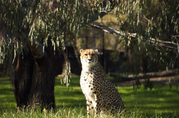 Beautiful animals at Taronga Western Plains