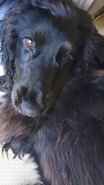 Puppy Ella