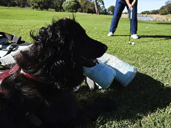 Golfdog at Mollymook Golf Club