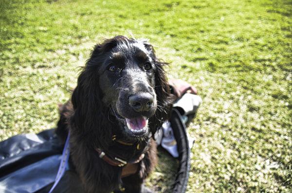 Gorgeous Ella at Mollymook Golf Club