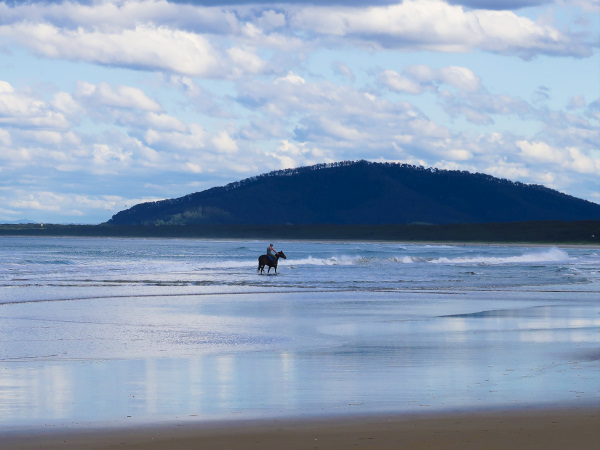 Horse at Seven Mile Beach
