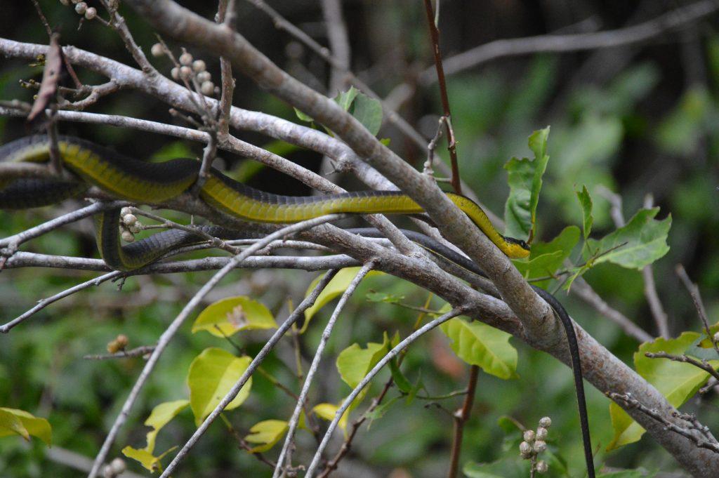 Tree Snake at the Solar Whisper Tour
