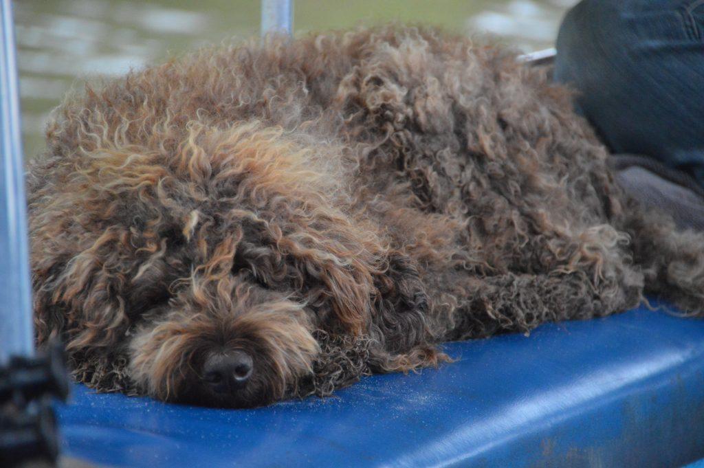Solar Whisper Dog Dougie