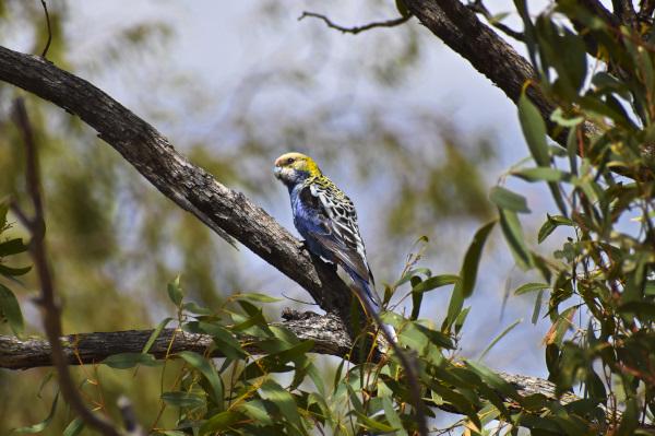 Birds at Porcupine Gorge