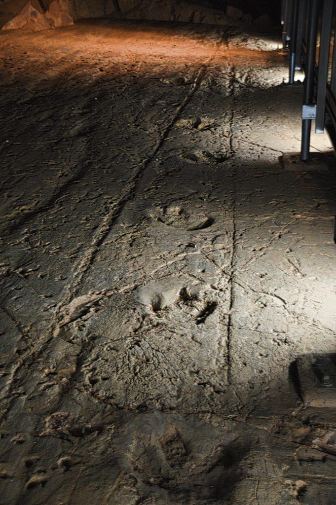Dinosaur Stampede National Monument