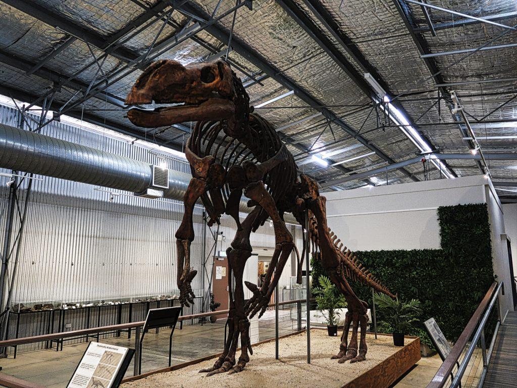 Muttaburrasaurus in Hughenden