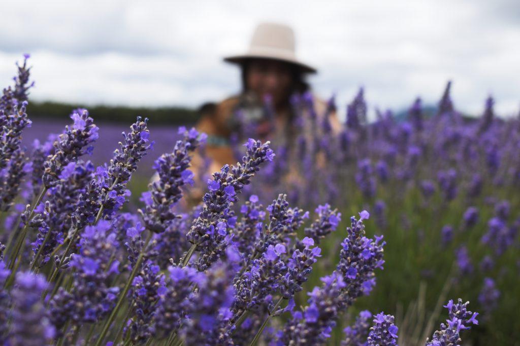Beautiful Lavender in Tasmania