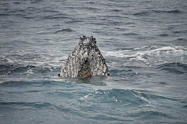 Curious Whale