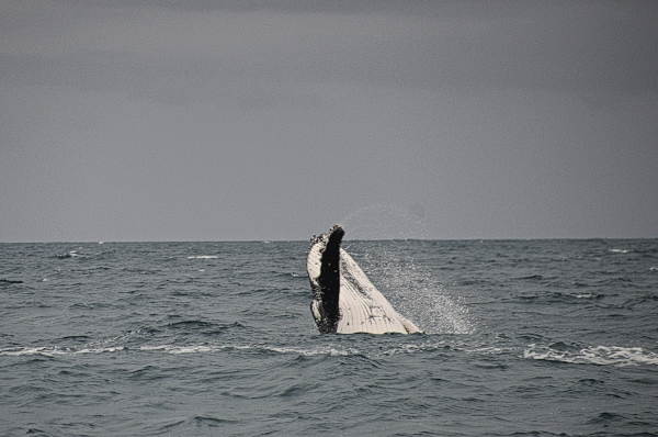 Seeing Whales in the Wild