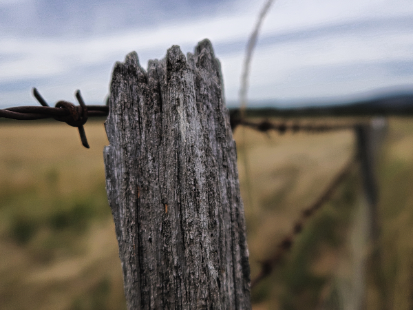 Sheep fences at Ratho Farm