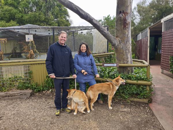 Walking the Dingos at Jirrahlinga Koala and Wildlife Sanctuary