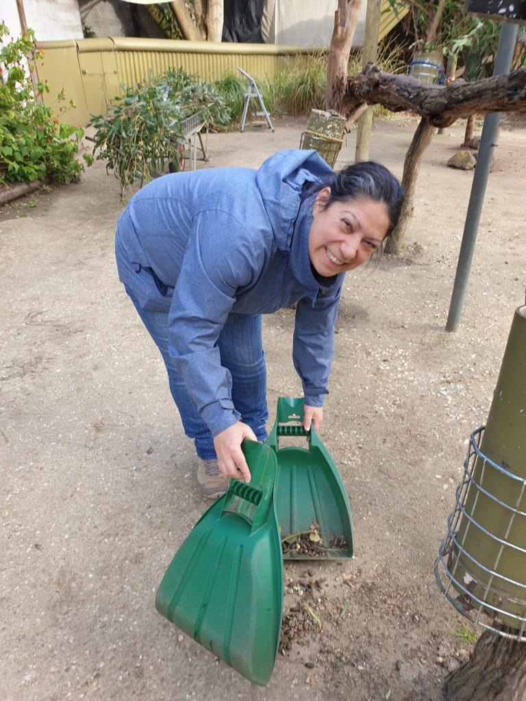 Sweeping Koala Poop