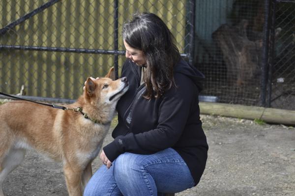 Friendly Dingoes at Jirrahlinga