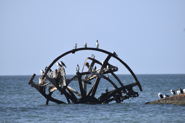 Ozone Shipwreck - The Best attractions on the Bellarine Peninsula