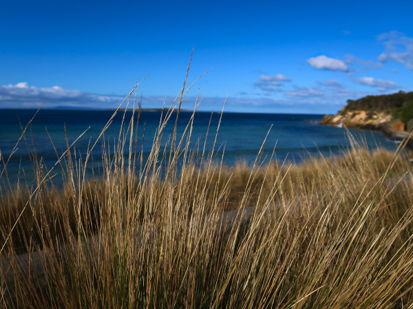 The Best attractions of the Bellarine Peninsula