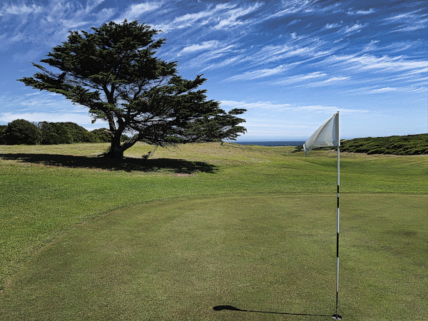 Lone cypress guarding the eighth green